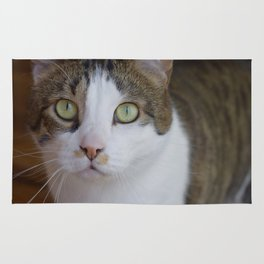 Green-Eyed Cat - Willow 2 Rug