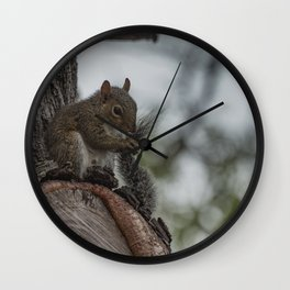 Squirrel Tail Wall Clock