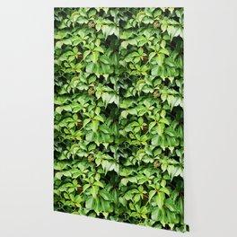 Summer Green Wallpaper