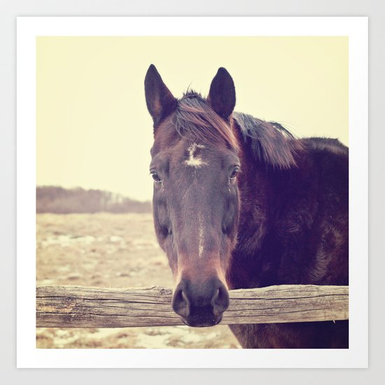 Hello Horse  Art Print