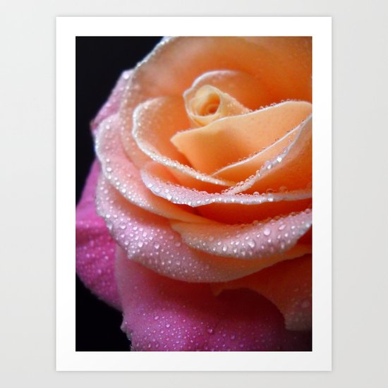 Rose Macro. On Front Page. Art Print