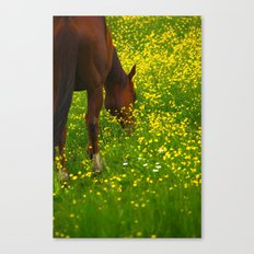 Enjoying The Wildflowers Canvas Print