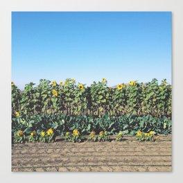 Swanton Berry Farm, Santa Cruz Canvas Print