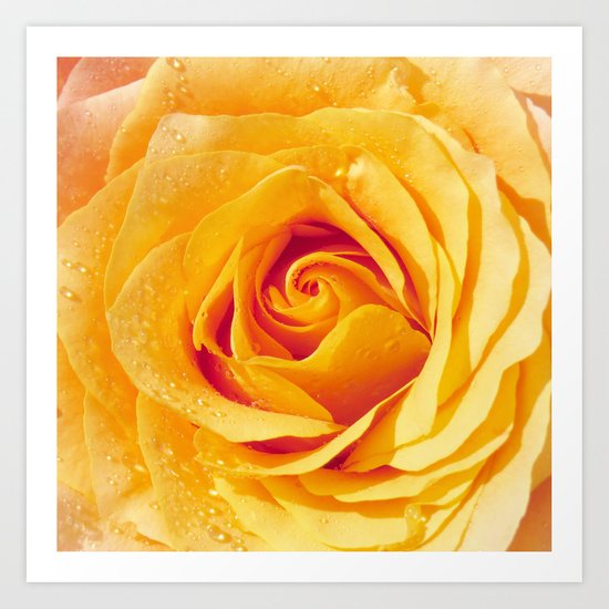 Gold Rose Bud- Yellow Roses and flowers Art Print