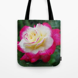 Double Delight Rose - Red and cream beauty Tote Bag