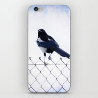 pie iPhone & iPod Skins featuring Pie by Clémence Aresu