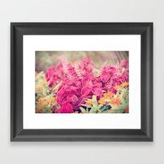 Garden Sunset  Framed Art Print