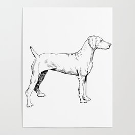 Viszla Dog Ink Drawing Poster
