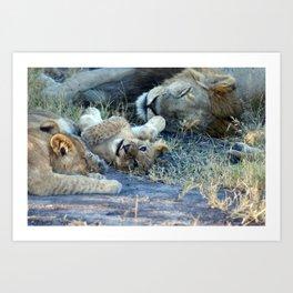 Playful Lion Cub Art Print