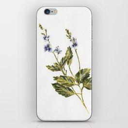 Veronica chamaedrys iPhone Skin