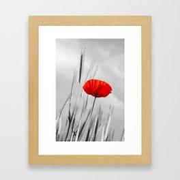 Poppy Red 070 Framed Art Print