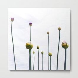 flowering onions Metal Print