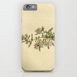 Flower lobelia corymbosa22 iPhone Case