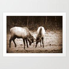 Fighting Elk Art Print