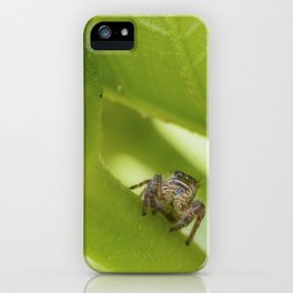 A Jumping Spider (Salticidae) hunts in the garden iPhone Case