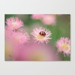 Her Eminence Canvas Print