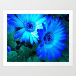 Neon Blue Gerbera  Daisy Art Print
