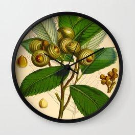 Vintage Scientific Illustration Himalayan Tree Nuts Scientific Illustration Wall Clock