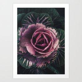 Pink Rosette Art Print