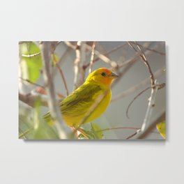 Bird Metal Print