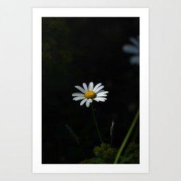Daisy and darkness Art Print