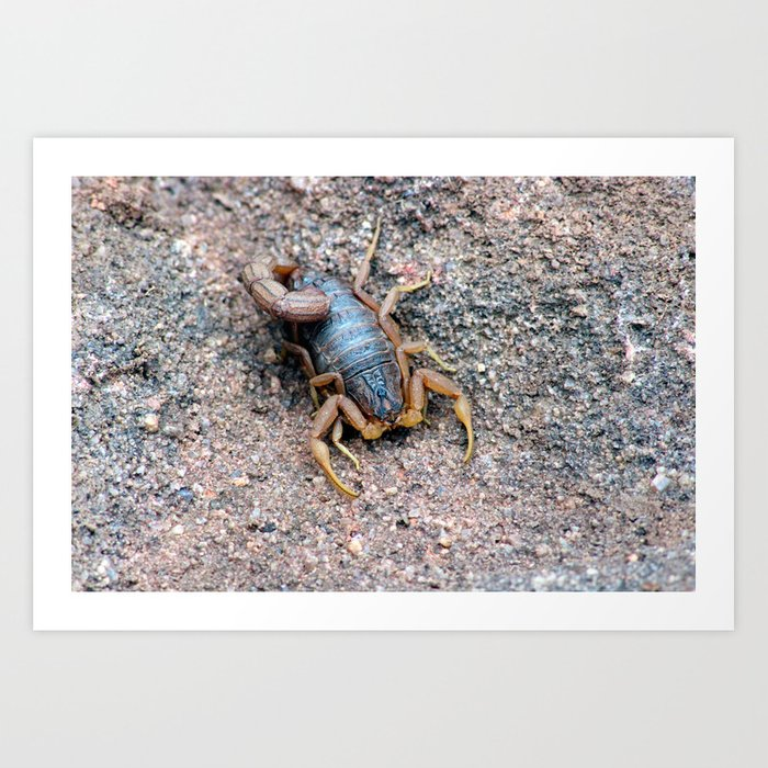 Beauty of a Scorpion  Art Print