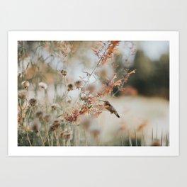 Hummingbird Love Art Print