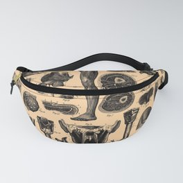Iconographic Encyclopedia of Science, Literature and Art (1851) - Human Anatomy Fanny Pack