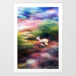 Rainbow Deer Art Print