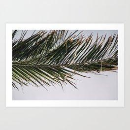 Palm Leaf against sky. Art Print