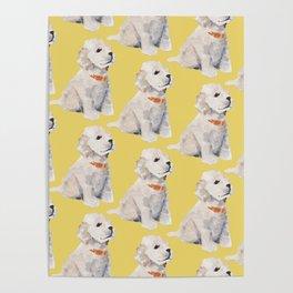 Cockapoo Pups Poster