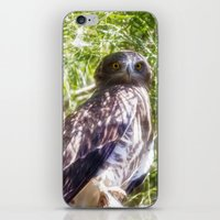 hawk iPhone & iPod Skins featuring Hawk by Veronika