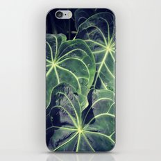 Luscious iPhone & iPod Skin