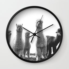alpaca posse Wall Clock