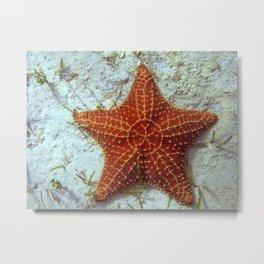 Bahama Mama Starfish Metal Print