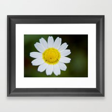 Miss Daisy Framed Art Print