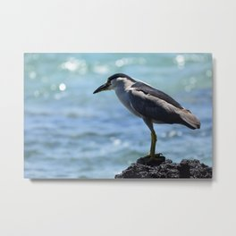 Black Crowned Night Heron Fishing Metal Print