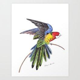 Rainbow Parrot Art Print