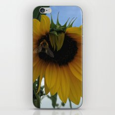Sunny Bee iPhone & iPod Skin