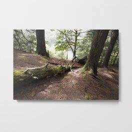 Deep in the Woods Metal Print