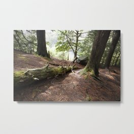 Deep in the Woods Metal Print