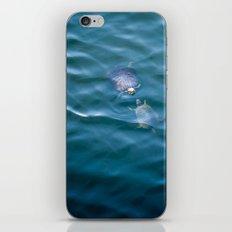 Turtles in love iPhone & iPod Skin