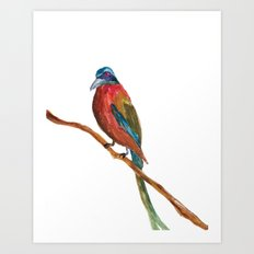 Study of a Bird 2 Art Print