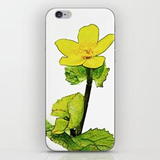 Marsh Marigold iPhone & iPod Skin