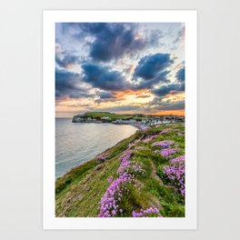 Freshwater Bay Sea Thrift Sunset (V) Art Print