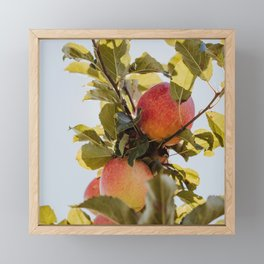 Autumn Apple II Framed Mini Art Print