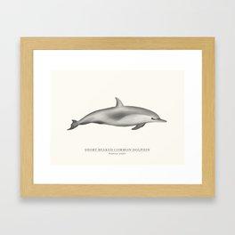 Short-Beaked Common Dolphin Framed Art Print