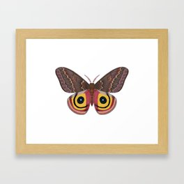 io moth (Automeris io) female specimen 2 Framed Art Print