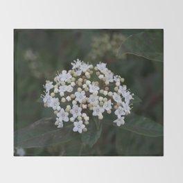 Viburnum tinus flowers and buds Throw Blanket