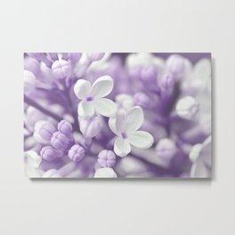 Lilac 167 Metal Print